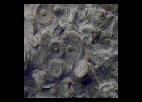 Maşinării vechi de 400 de milioane de ani descoperite în Rusia