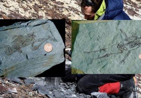 umanoid schelet Antarctica